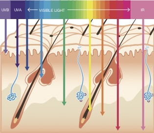HOW LIGHT PENETRATES SKIN